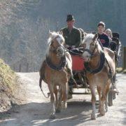 mnichov kone