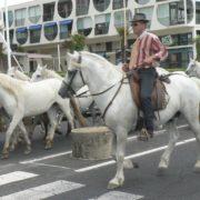 MontpellierKun